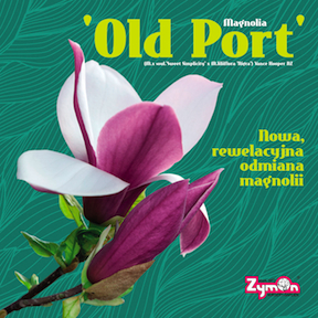 Magnolia 'Old Port'